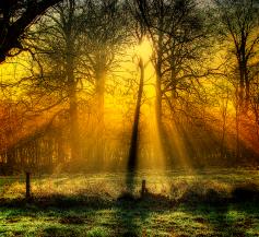 Golden LIght - photo credit Martyn Starkey