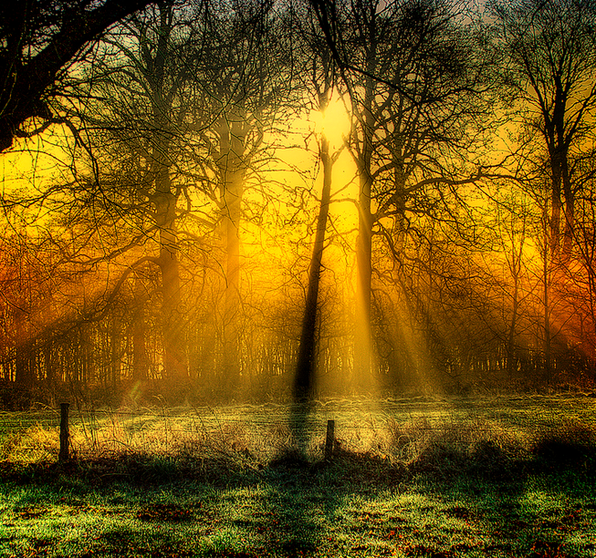 Golden LIght - photo credit Martyn Starkey